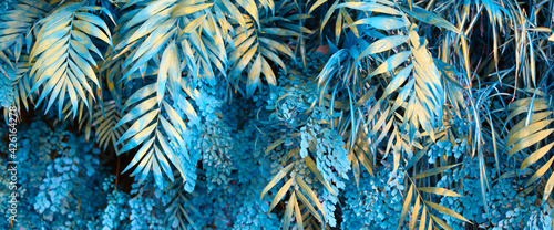 Obraz Wall with tropical plants. Nature blue background. - fototapety do salonu