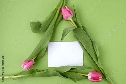 Obraz spring flat lay isolated on green background - fototapety do salonu