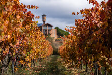 Vineyards Of Rioja Region With Autumn Colors. Sunrise Time