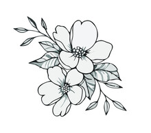 Sketch Of Two White Flowers