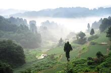 棚田の朝。新潟県の山間地は耕作地が少なく、山の斜面を切り拓いて稲田が作られた。この松之山地区は入り組んだ谷の斜面で耕作が続いている。夏に発生する霧が良質の米を実らせる。