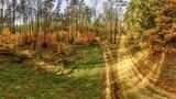 Fototapeta Na ścianę - Jesienny las widziany z lotu ptaka