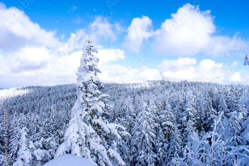 Fototapeta Las z lotu ptaka w słoneczny dzień zimą obraz