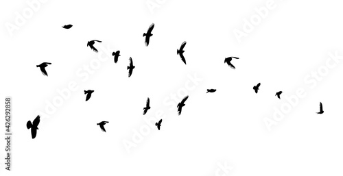 A flock of flying birds. Vector illustration Fototapet