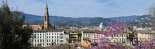 Beautiful Cityscape Of Florence With Basilica Of The Holy Cross And Synagogue With Flowering Judas Tree In Spring. Italy