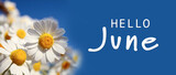 Hello June. Beautiful blooming chamomiles on blue background, banner design