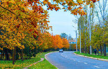 Autumn In The City, Trees With Yellow Leaves, Roads And Houses