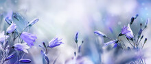 Lilac Bellflowers On A Blurred Purple Blue Background