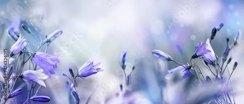 Fotografia Lilac bellflowers on a blurred purple blue background
