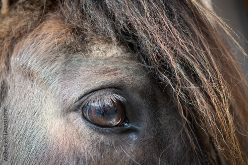 Obraz na plátně Auge (Pferd/Pony)