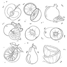 Black And White Collection Of Juicy Fruit Illustrations. Suitable For Decorating Stylish Postcards,  Books And Other Design Solutions