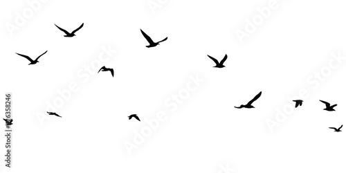 Obraz na plátně silhouettes of birds set