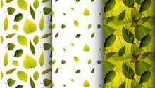 Three Various Green Leaves Spring Nature Pattern