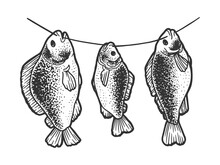 Crucian Carp Fish Dries On A Rope Sketch Engraving Vector Illustration. T-shirt Apparel Print Design. Scratch Board Imitation. Black And White Hand Drawn Image.