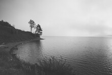 Trees On The Lakeside In Stormy Weather