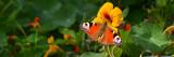 Schmetterling 781