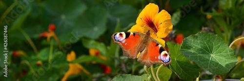 Fototapeta Schmetterling 781 obraz
