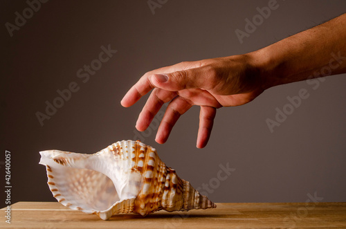 Large marine conch in beige tones resting on a wooden table Fototapeta