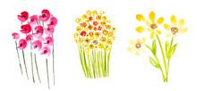 Set Di Bouquet Ad Acquerello Isolati Su Sfondo Bianco