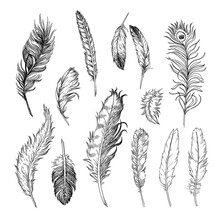 Different Feathers Of Birds Engraved Illustrations Set. Hand Drawn Vintage Ink Sketch Of Bird Quills Isolated On White Background. Birds, Tattoo Concept