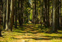 Footpath In The Green Forest