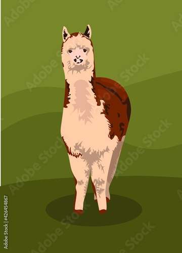 Fototapeta premium cute realistic llama alpaca wool. brown llama. farm animal. production of alpaca wool. isolated on natural green background. vector