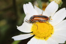 Insects On Plants And Flowers In Spring