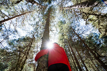 Shallow Focus Of A Tree Hugger At A Pine Forest