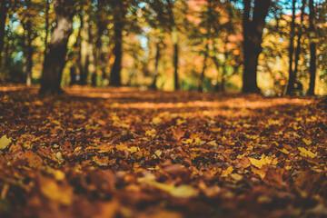 Jesienne liście na drzewie.
