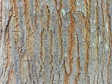 Closeup Shot Of A Tree Bark Texture