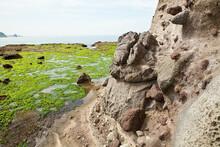 干潮で青藻の現れた西方海岸