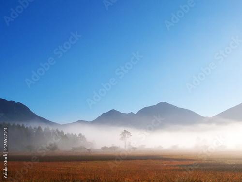 Obraz na plátně 湿原の朝。霧に包まれた草木の間から小鳥の鳴き声が立ち上がる。栃木県日光市。