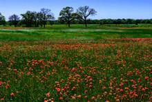 East Texas Wildflowers-0540