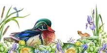 Spring Wild Nature Scene. River Flowers, Carolina Duck And Small Frog Image. Watercolor Illustration. Bright Water Bird And Lush Flowers Border. Decorative Realistic Hand Drawn Image. Wildlife Scene