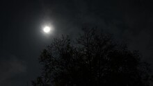 4K Supermoon Full Moon And Tree Timelapse Scary Scene 1