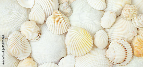 Canvastavla Summer nature background of white scallops