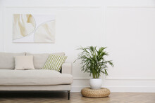 Comfortable Sofa And Houseplant Near White Wall In Living Room