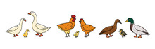 Set Of Vector Outline Doodle Cartoon Duck, Goose, Cock Families. Males, Females And Yellow Babies. Isolated Hand Drawn Illustration Of Cute Farm Domestic Bird Animals On White Background.