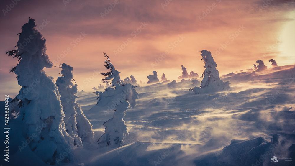 Fototapeta Mroźna kraina