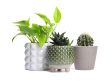 Different House Plants In Pots Isolated On White