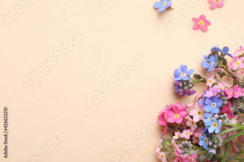 Obraz Beautiful Forget-me-not flowers on beige background, flat lay. Space for text - fototapety do salonu