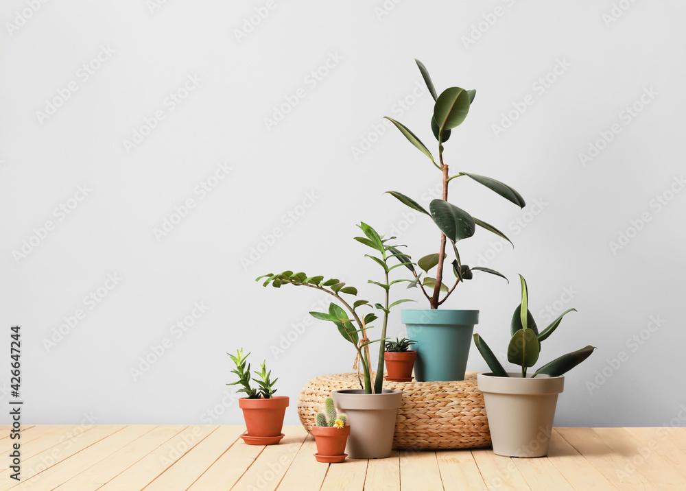 Fototapeta Pots with plants on light background