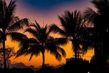 Palm Trees In A Sunset In Vietnam
