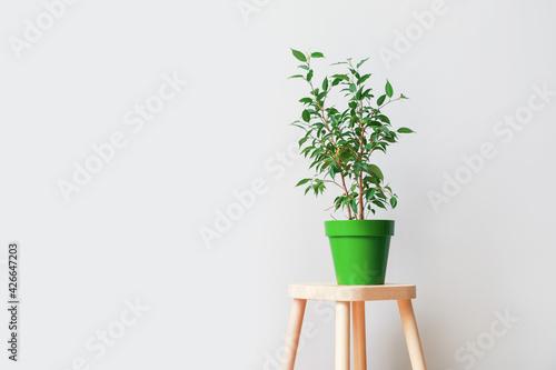 Billede på lærred Wooden stand and pot with plant on light background