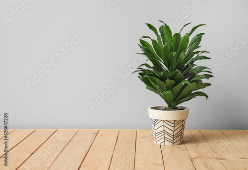Pot with plant on light background Fotobehang