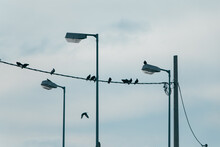 Some Doves On Electricity Power Wires Like