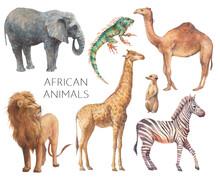 Watercolor Safari Animals Illustration. Hand Drawn Set Of Animals Isolated On White Background. African Fauna: Lion, Elephant, Camel, Giraffe, Zebra, Iguana