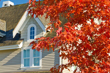Fragment Of A Nice House Over Beautiful Red Maple Tree In Vancouver, Canada.