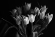 black and white tulip
