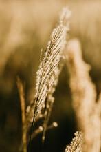 Vertical Shot Of Sunlit Grass In A Field